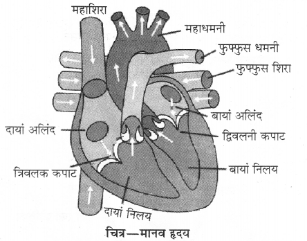RBSE Solutions for Class 10 Science Chapter 2 1