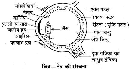 RBSE Solutions for Class 10 Science Chapter 9 प्रकाश 5