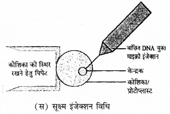 RBSE Solutions for Class 12 Biology Chapter 16 पादप ऊतक संवर्धन 3
