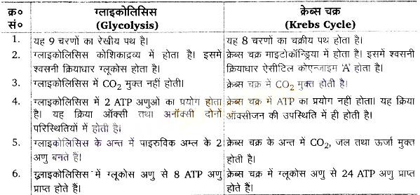 UP Board Solutions for Class 11 Biology Chapter 14 Respiration in Plantsimage 2