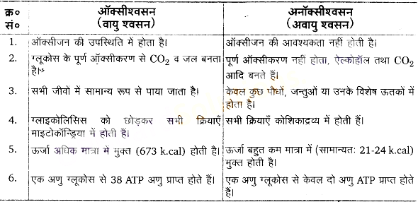 UP Board Solutions for Class 11 Biology Chapter 14 Respiration in Plantsimage 13
