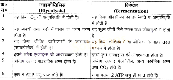 UP Board Solutions for Class 11 Biology Chapter 14 Respiration in Plantsimage 14