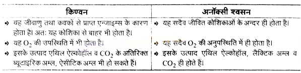 UP Board Solutions for Class 11 Biology Chapter 14 Respiration in Plantsimage 20