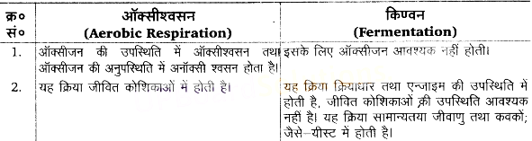 UP Board Solutions for Class 11 Biology Chapter 14 Respiration in Plantsimage 3