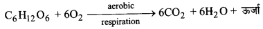 UP Board Solutions for Class 11 Biology Chapter 14 Respiration in Plantsimage 21