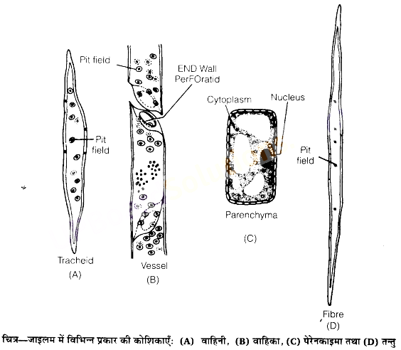 UP Board Solutions for Class 11 Biology Chapter 6 Anatomy of Flowering Plants image 19
