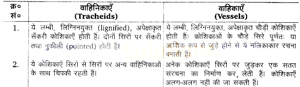 UP Board Solutions for Class 11 Biology Chapter 6 Anatomy of Flowering Plantsimage 3