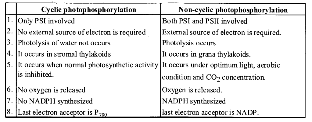 NCERT Solutions for Class 11 Biology Chapter 13 Photosynthesis 3