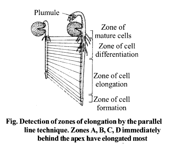 NCERT Solutions for Class 11 Biology Chapter 15 Plant Growth and Development 1