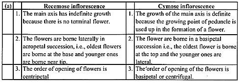 NCERT Solutions for Class 11 Biology Chapter 5 Morphology of Flowering Plants 2