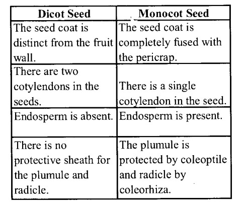 NCERT Solutions for Class 11 Biology Chapter 5 Morphology of Flowering Plants 16