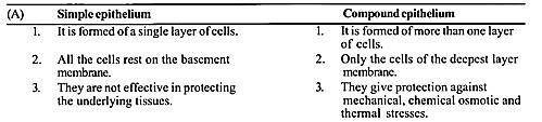 NCERT Solutions for Class 11 Biology Chapter 7 Structural Organization in Animals 7