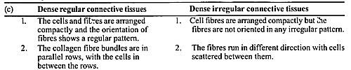 NCERT Solutions for Class 11 Biology Chapter 7 Structural Organization in Animals 9