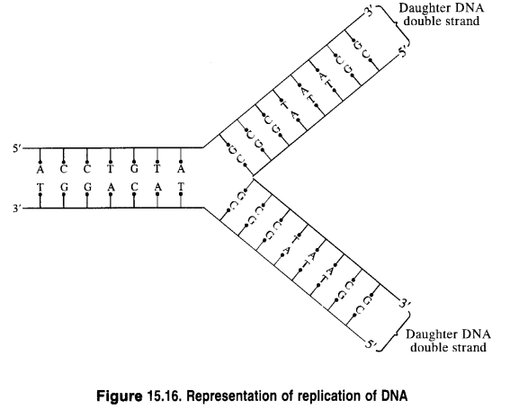 NCERT Solutions for Class 12 Chemistry Chapter 14 Biomolecules 7